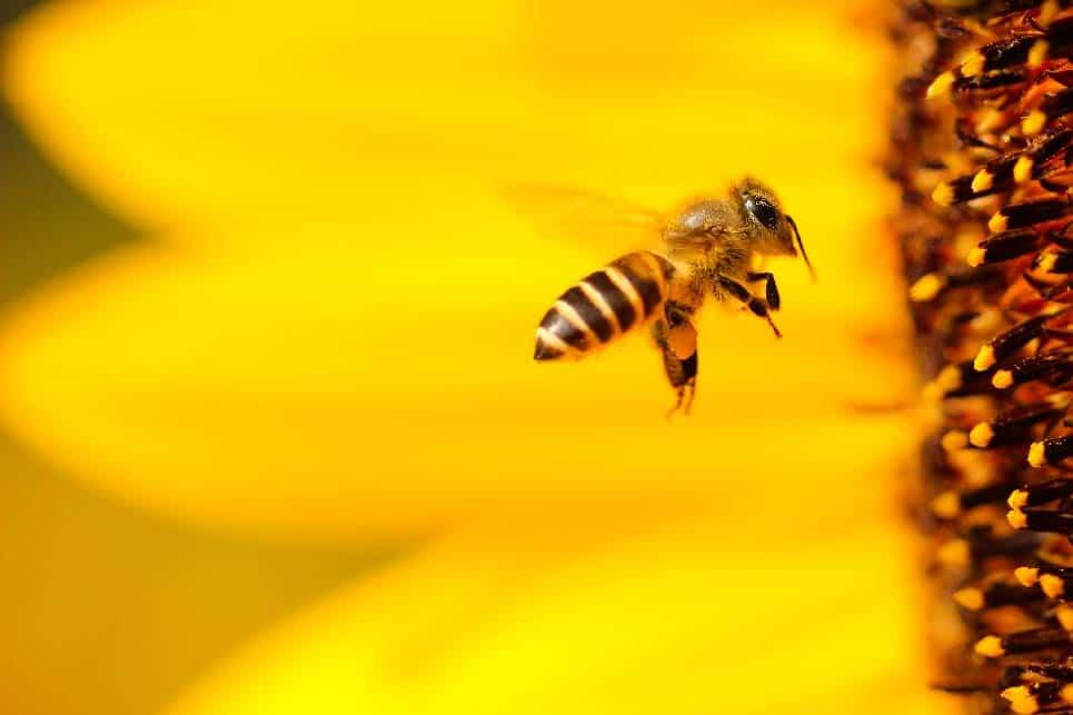 abeja cera de abeja