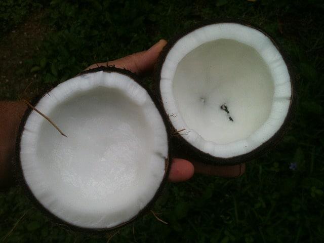 coconut-648105_640