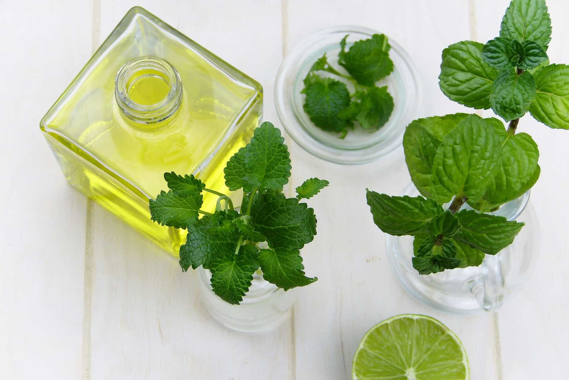 plantas aromaterapia